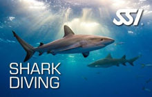SSI Shark Ecology