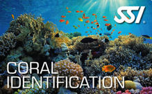 SSI Coral Identification